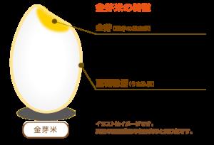 金芽米の特徴
